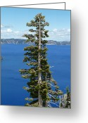 2hivelys Art Greeting Cards - A Tree With A View Greeting Card by Methune Hively