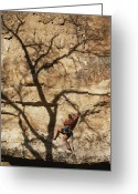 Trees And Rock Cliffs Greeting Cards - A Trees Shadow Cast Across A Climber Greeting Card by John Burcham