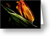 Yellow Flower Digital Art Greeting Cards - A Tulip With Sheen Greeting Card by David Patterson