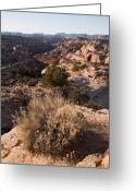 Grand Staircase - Escalante National Monument Greeting Cards - A View Into On Of The Canyons Greeting Card by Taylor S. Kennedy