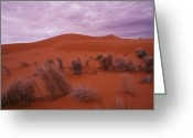 Desolate Landscapes Greeting Cards - A View Of Dried Scrub Grasses Greeting Card by Medford Taylor