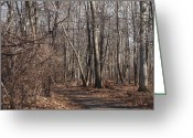 Log Cabin Photographs Greeting Cards - A Walk In The Woods Greeting Card by Robert Margetts