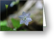 Tiny Flowers Greeting Cards - A Washed Flower Greeting Card by Jeff  Swan