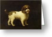 Extinct Greeting Cards - A Water Spaniel Greeting Card by George Stubbs