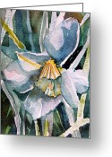Fine Art Watercolor Drawings Greeting Cards - A Weepy Daffodil Greeting Card by Mindy Newman