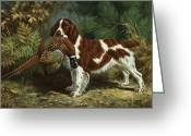 Spaniels Greeting Cards - A Welsh Springer Spaniel Holds A Dead Greeting Card by Walter A. Weber