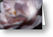 Roses Petals Greeting Cards - A Whisper of Pink Greeting Card by Barbara  White