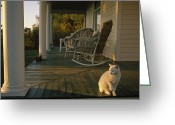 Wicker Chairs Greeting Cards - A White Cat In Sunlight On A Columned Greeting Card by Joel Sartore