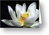 Lotus Seed Pod Greeting Cards - A White Lotus Greeting Card by Sabrina L Ryan