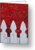 Middle Town Pennsylvania Greeting Cards - A White Picket Fence Against Red Autumn Greeting Card by Lynn Johnson