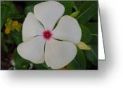 Photographs With Red. Greeting Cards - A White Star with a Red Center Greeting Card by Chad and Stacey Hall