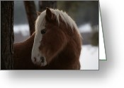 Wild Horse Greeting Cards - A Wild Horse In The Snow Covered Ochoco Greeting Card by Melissa Farlow