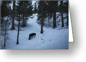 Pacific Coast States Greeting Cards - A Wild Mustang Foraging In The Snow Greeting Card by Melissa Farlow