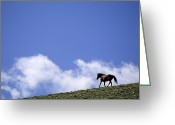 Image Type Photo Greeting Cards - A Wild Mustang On The Crest Of A Hill Greeting Card by Gordon Wiltsie