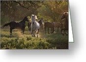 Pacific Coast States Greeting Cards - A Wild Stallion With Herd Greeting Card by Melissa Farlow