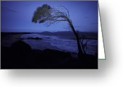 Skeletal Greeting Cards - A Windswept Scraggly Coastal Tree Greeting Card by Jason Edwards