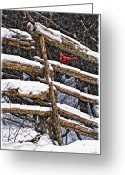 Cedar Fence Greeting Cards - A Winter Moment Greeting Card by Steve Harrington