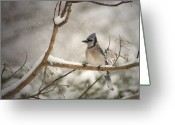 Bluejay Birds Greeting Cards - A Winters Day Greeting Card by Lori Deiter