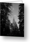 Tahoe Greeting Cards - A Woodlands Prayer Greeting Card by Leah Moore