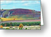 Grapevines Greeting Cards - A Yamhill Co. Vineyard Greeting Card by Margaret Hood