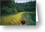 Hairstyles Greeting Cards - A Young Girl Wanders The Rice Fields Greeting Card by Lynn Johnson