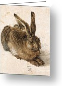 Hare Greeting Cards - A Young Hare Greeting Card by Pg Reproductions