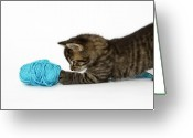 Side View Greeting Cards - A Young Tabby Kitten Playing With Wool. Greeting Card by Nicola Tree