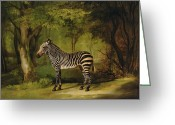 Stripes Greeting Cards - A Zebra Greeting Card by George Stubbs