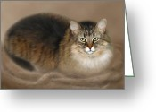 Kitty Digital Art Greeting Cards - Abby Greeting Card by Barbara Hymer