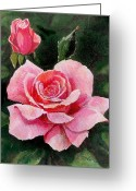 Rose Petals Greeting Cards - Abigail Rose Greeting Card by Edward Farber