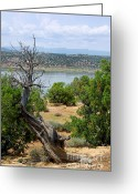 Chama River Greeting Cards - Abiquiu Lake New Mexico 2 Greeting Card by Vicki Pelham