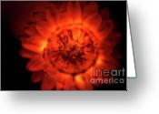 Summers Greeting Cards - Ablaze Greeting Card by Wenata Babkowski