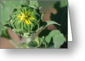 Yellow Greeting Cards - About to Burst Greeting Card by Kimberly Gonzales