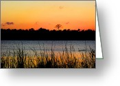 St. Lucie County Greeting Cards - Above the Rest Greeting Card by Grace Dillon