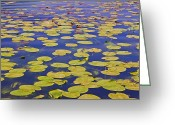 Lotus Leaves Greeting Cards - Absolutly Idyllic Greeting Card by Joana Kruse