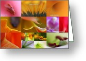 Sunflower Studio Art Greeting Cards - Abstract Fine Art Flower Photography Greeting Card by Juergen Roth