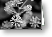 Bud Greeting Cards - Abstract Plant Greeting Card by Stefan Janeschitz