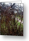 Pussy Willow Branches Greeting Cards - Abstract Pussy Willows Greeting Card by Cindy Boyd