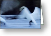 Colette Greeting Cards - Abstract Swan Dance Greeting Card by Colette Hera  Guggenheim