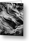 Biggest Tree Greeting Cards - Abstract tree - black and white Greeting Card by Hideaki Sakurai