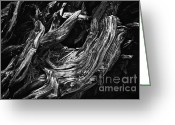 Biggest Tree Greeting Cards - Abstract tree V - black and white Greeting Card by Hideaki Sakurai