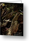 Biggest Tree Greeting Cards - Abstract tree Vl Greeting Card by Hideaki Sakurai