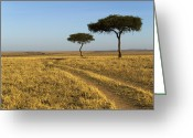 Maasai Mara Greeting Cards - Acacia Trees In The Maasai Mara Greeting Card by Nigel Hicks