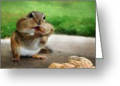 Chipmunk Greeting Cards - Addicted to Nuts Greeting Card by Lori Deiter