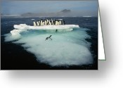 Ice-floe Greeting Cards - Adelies on Ice Floe Greeting Card by Tui De Roy