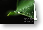 Dew Drop Greeting Cards - Adew Greeting Card by Kendra Clayton