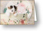 Playful Kitten Greeting Cards - Adorable Kitten Greeting Card by Datha Thompson