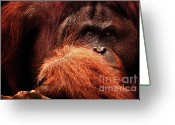 Asia Greeting Cards - Aetiology Greeting Card by Andrew Paranavitana