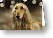 Hound Greeting Cards - Afghan Greeting Card by Rebecca Cozart