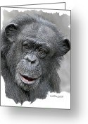 Ape. Great Ape Greeting Cards - African Chimpanzee Greeting Card by Larry Linton